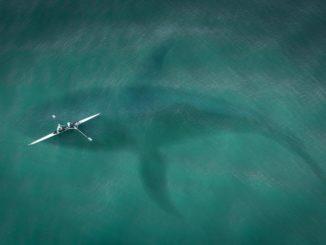 Originalaufnahmen zeigen riesigen Hai vor Kroatiens Küste