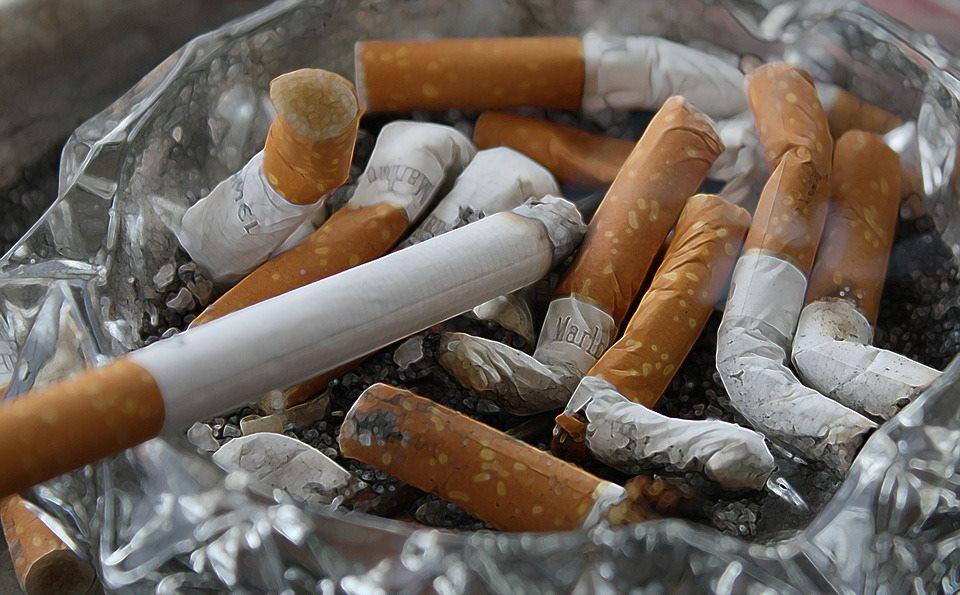Wenn aus Zigarettenstummel Pflanzen wachsen - Cigg Seeds