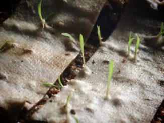 indische Unternehmen Karma Filtertips zigarettenstummeln kippen wachsen pflanzen bäume umweltschutz ideen natur