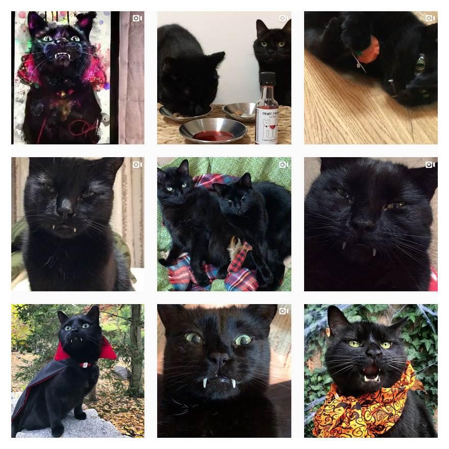 Hier ein paar Bilder von der Vampirkatze Monk und seinem Katzenbruder Bean. Mehr Bilder gibt es auf deren Instagram-Account