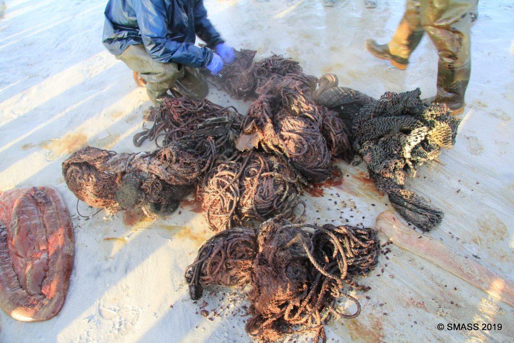 Gestrandet. Pottwal stirbt mit 100 Kg Müll im Magen Fischernetze Plastik Treibgut