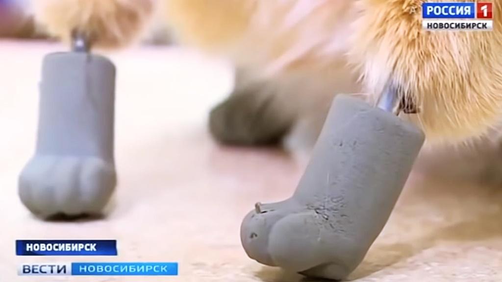 Der arme kleine Ryzhik erleidet durch eisigen Temperaturen in Sibirien eine schwere Erfrierung. Katze erhält in einer langen Operation Prothesen für ihre Pfötchen. Katze erhält bionische Titanglieder